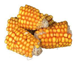 PURE NATURE Maïskolfstukken